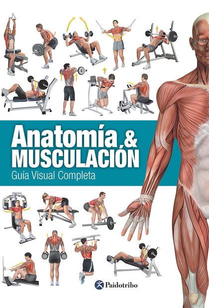 ANATOMÍA & MUSCULACIÓN : GUÍA VISUAL COMPLETA