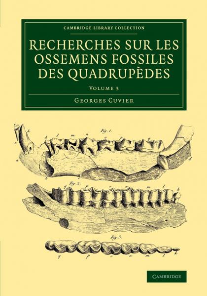 RECHERCHES SUR LES OSSEMENS FOSSILES DES QUADRUPÈDES - VOLUME             3
