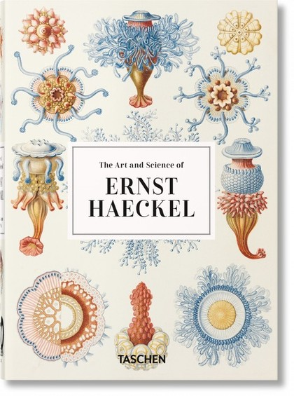 ERNST HAECKEL – 40