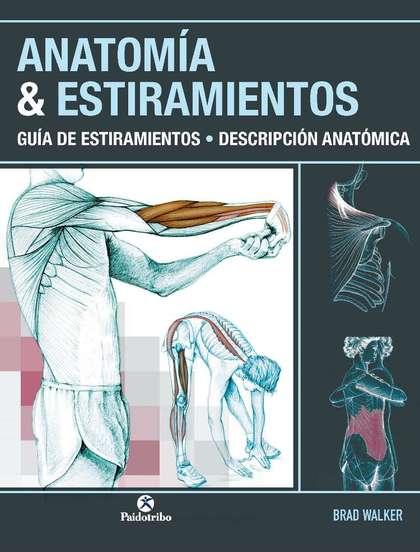ANATOMÍA & ESTIRAMIENTOS. GUÍA DE ESTIRAMIENTOS. DESCRIPCIÓN ANATÓMICA (COLOR).. GUIA DE ESTIRA