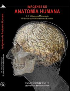 IMÁGENES DE ANATOMÍA HUMANA