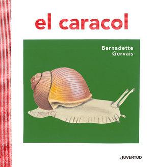 CARACOL EL