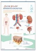 APARATO DIGESTIVO  APARATO EXCRETOR : ANATOMÍA DE PRIMARIA