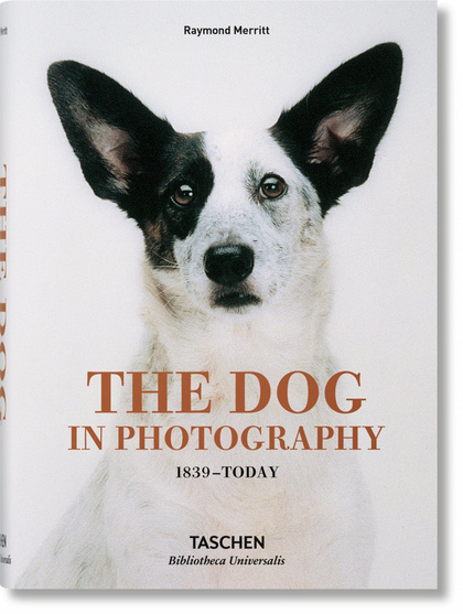 DOG IN PHOTOGRAPHY 1839 TODAY (AL/FR/IN).