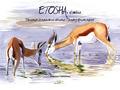 ETOSHA. DIBUJANDO LA NATURALEZA AFRICANA / DRAWING AFRICAN NATURE